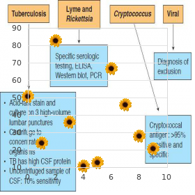 11 beta hydroxylase deficiency